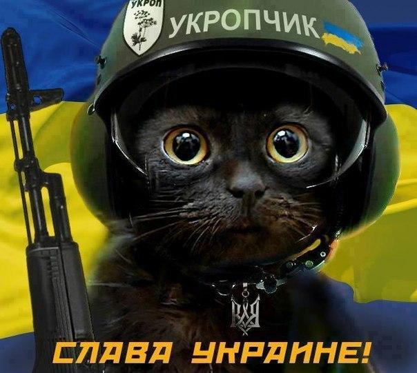 Россельхознадзор не пустили в Крым пятерых котов, двух попугаев и черепаху - Цензор.НЕТ 1856
