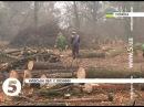 """""""Чернечий ліс"""" готують під забудову - екологи б'ють на сполох"""