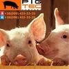 Pig Tec
