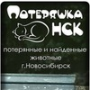 Потеряшка-НСК. Потерянные животные. Новосибирск.