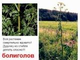 Растения ядовитые