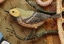 панова - перелетные птицы
