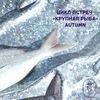 Цикл встреч «Крупная рыба»