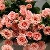 Сеть цветочных салонов г. Сызрань Интер Букет