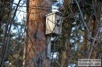 08 марта 2015 -  Баныкинский лес Тольятти. В ожидание весны