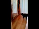 мой кот - дурак )