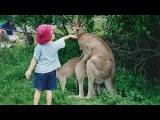 Дети в зоопарке - веселые моменты ))) ПРИКОЛЫ видео из ютуб