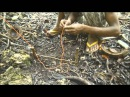 Как поймать кокосового краба? САМОДЕЛЬНАЯ ЛОВУШКА!