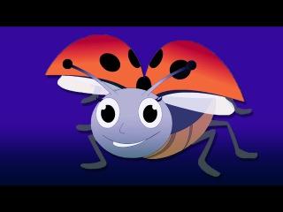 Lady Bug Lady Bug Fly Away Home Song | Children's Nursery Rhyme With Lyrics | English Nursery Rhymes