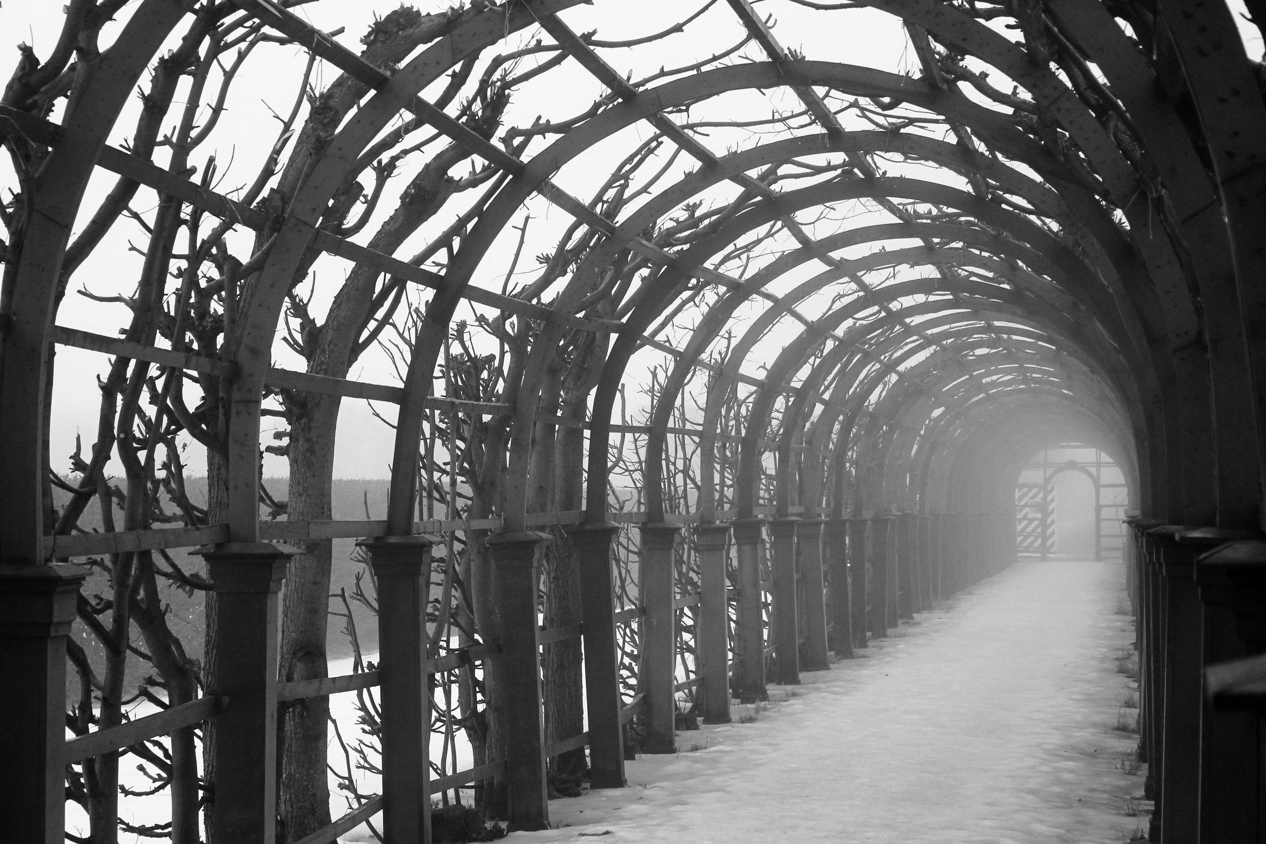 Петергоф, туман