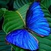 Выставка-продажа живых бабочек в Тюмени!