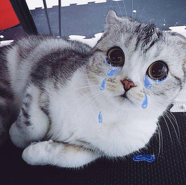 cat cries all night long