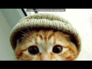 «котик» под музыку ٭Кошачий хор٭ - Мяу мяу мурр :))). Picrolla