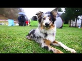 Doggone Jolly's Hakuna Matata - TAABU ♡ [7months]