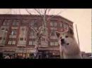 Самые трогательные моменты из фильма Хатико