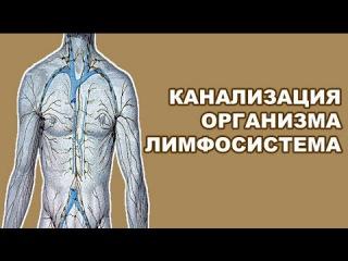 Здоровье и Лимфосистема. Очень важные знания о здоровье