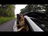 BRO-TV: Приключения с собакой по кличке Олли