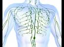 Остеопатия на лимфатической системе - мфр, жидкостные, орто-техники