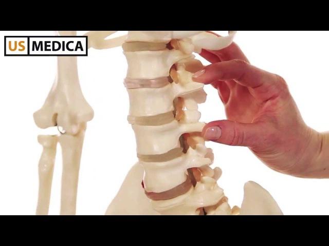 Тренажер для растяжки спины US MEDICA Flexyback