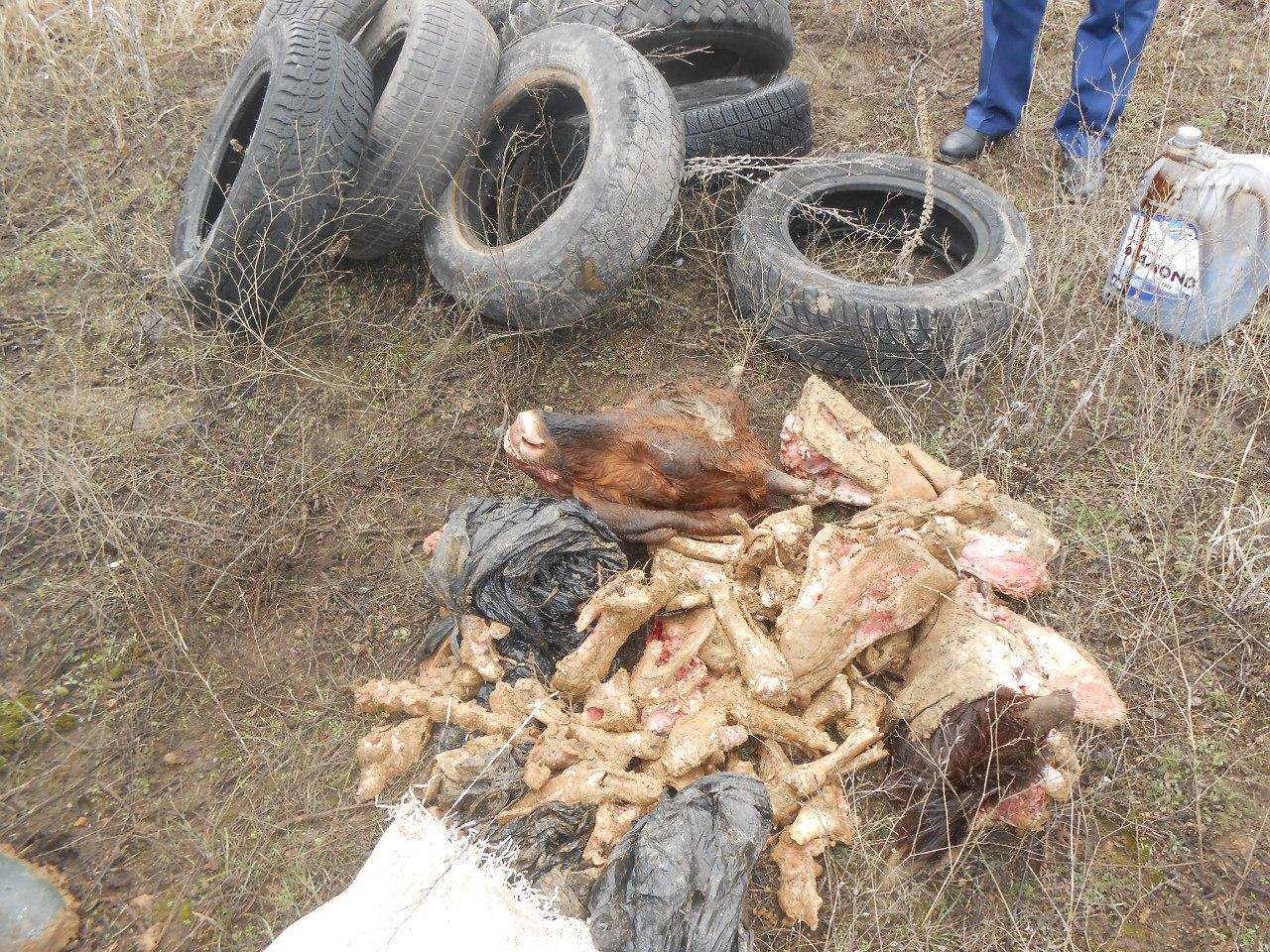 В Новочеркасске вет. специалисты уничтожили выброшенные на трассе биоотходы
