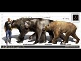 Доисторические хищники: Короткомордый медведь арктодус серия 3 (динозавры HD) документальный фильм