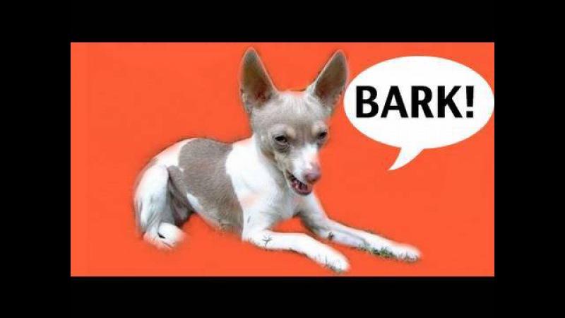 Как отучить собаку лаять на звуки