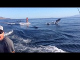 Dolphin Surfing, Woman Wakeboarding with Dolphins as seen on TV (WORLDWIDE!!)