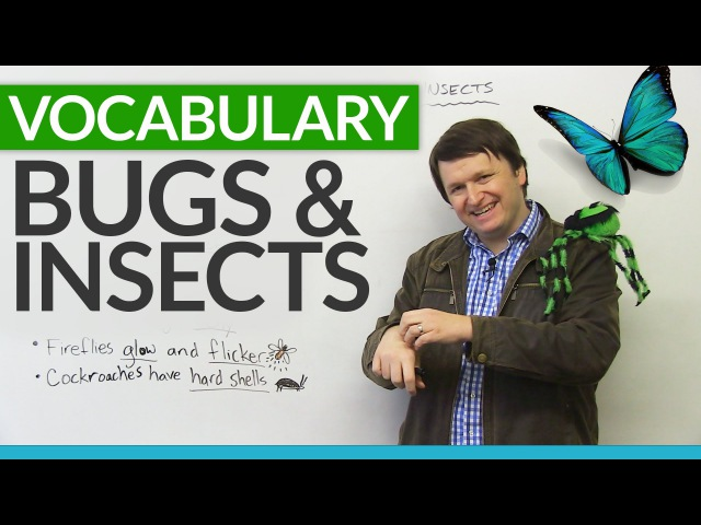 Talking about BUGS and INSECTS