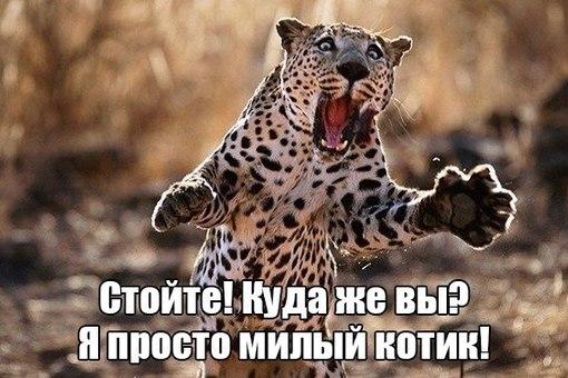 http://cs621731.vk.me/v621731408/1146/2aCtEUpz5SQ.jpg