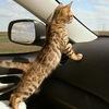 Auto-cat