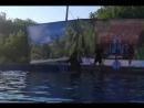Выступление в дельфинарии г.Яровое ч.2