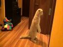 Кот в шоке! My cat shocked!