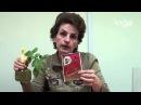 Паутинный клещ на розах. Препарат Актеллик. Сайт Садовый мир