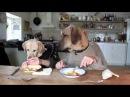 Masada Yemek Yiyen Köpekler Dünya Rekoru