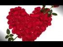 МЕГА КРАСИВАЯ песня Алая роза СЛУШАТЬ 100