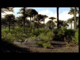 T-Rex Attack of the Dinosaur Walking with Dinosaurs in HQ BBC
