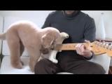 Собака-гитарист
