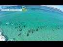 Дельфины ловят волну у побережья Австралии