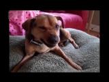 Самые прикольные собаки в мире. Смешные собаки и щенки видео - YouTube (720p)