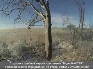 охота на волков с квадроцикла на Донбассе
