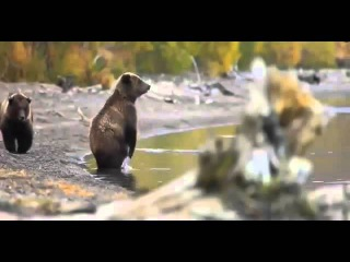 Приколы с животными 2014 года Смешные животные 2014 Подборка Видео Приколов