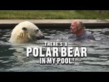 DOCS There's A Polar Bear In My Pool!