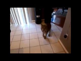 Самая смешная подборка видео приколов с животными Январь 2015 [CCП]#2