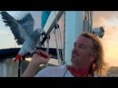 Sailing the CARIBBEAN with a CRAZY PARROT Filmed in St Thomas USVI CARIBBEAN