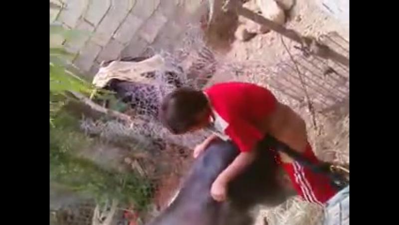 ослы трахуют ослицу