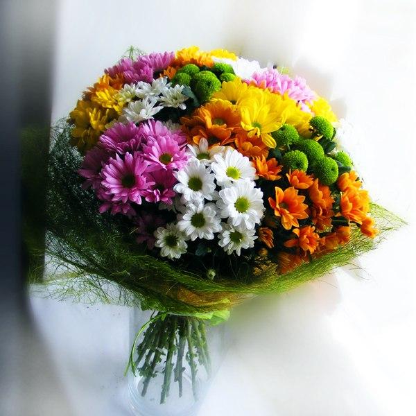 хризантема гомпи супер