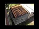 12 или 10 рамочный дадан с магазинами и мед получить и роения не бояться