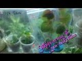 Укоренение черенков и листов комнатных растений в зип-пакетах