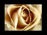 Феликс Царикати Золотая Роза