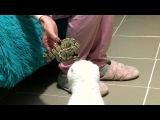 Кот, собачка и испуганная змея))